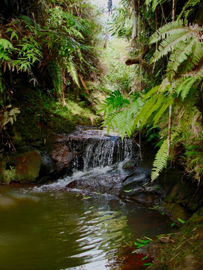 ravine.Mt.alutom.fern headwater – Version 2
