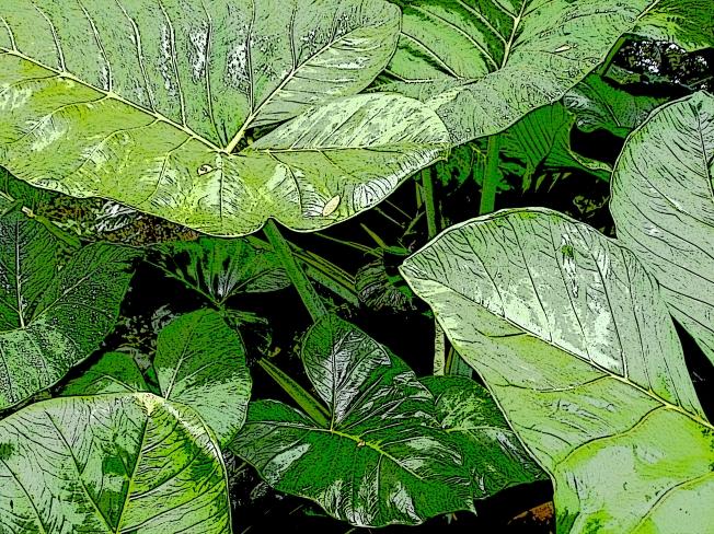 suni-leaves-poster-exposure-naturescape